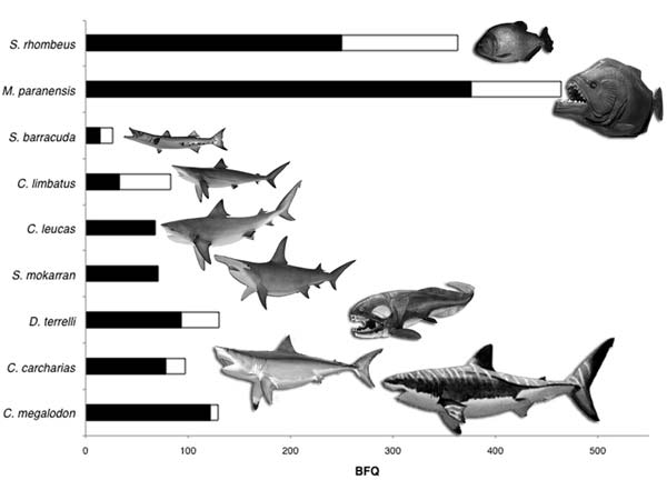 De bijtkracht van roofvissen met elkaar vergeleken. Afbeelding: © Karen Carr.