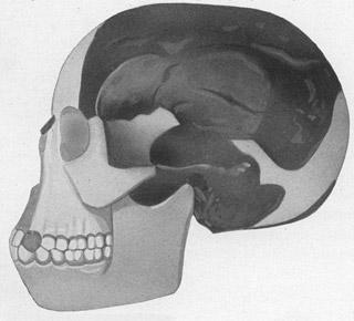 Een reconstructie van de Piltdown Man. Afbeelding: J. Arthur Thomson / The Outline of Science (via Wikimedia Commons).
