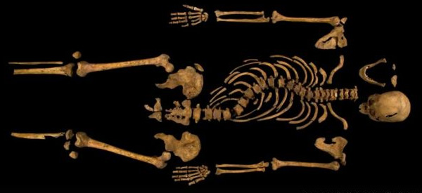 Het volledige skelet. Foto: University of Leicester.