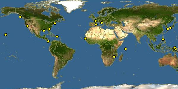 T. nutricula komt wereldwijd voor. Afbeelding: Discover Life / The Polistes Corporation.