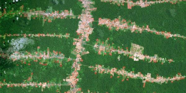 Een voorbeeld van 'dom aangelegde wegen'. De aanleg van wegen heeft in dit geval geleid tot ontbossing. Foto: Google Earth / UU.nl.