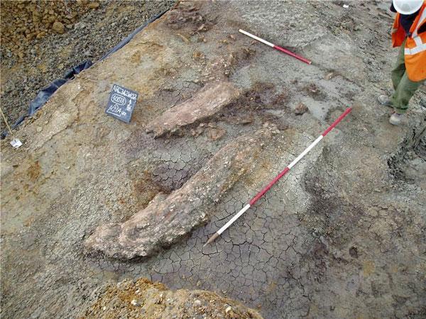 De slagtand van de prehistorische olifant. Afbeelding: University of Southampton.
