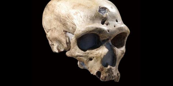 Half Life dating fossielen