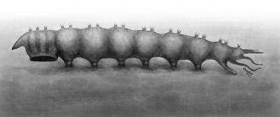 Deze tekening laat het lijfje van de parasitaire larve goed zien. Afbeelding: Yang Dinghua / Nanjing.