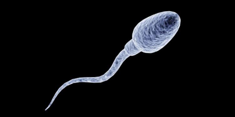 spermacel1