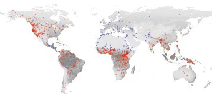 Deze kaart laat de verspreiding van samenlevingen die geloven in hogere, moraliserende goden (blauwe stipjes) en samenlevingen die niet geloven in hogere moraliserende goden (rode stipjes) zien. De grijstinten vertellen meer over de plantgroei. Hoe lichter de kleur grijs, hoe beperkter de potentie van dit gebied als het gaat om plantgroei. Afbeelding: Carlos Botero.