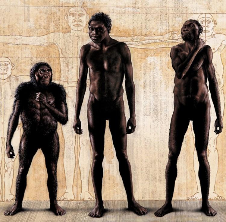 Links zie je Lucy (Australopithecus afarensis, 3,2 miljoen jaar oud), met daarnaast Turkana Boy (Homo erectus, 1,6 miljoen jaar oud) en de Rising Star-hominide (Homo naledi, leeftijd onbekend).