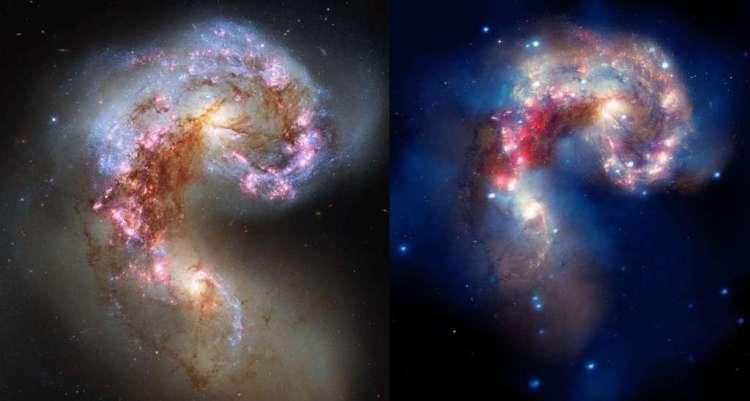 Links: Een afbeelding van de Antennaestelsels, twee sterrenstelsels die met elkaar versmelten, gemaakt met de Hubble Space Telescope. Op deze afbeelding in zichtbaar licht zijn de sterren te zien: blauwe sterren zijn jong en heet, rode sterren zijn ouder en koeler. Roze markeert heet waterstofgas in stervormingsgebieden. Er is ook veel stof te zien dat geen zichtbaar licht doorlaat. (Hubble/European Space Agency) Rechts: Dezelfde sterrenstelsels, nu gezien door de Chandra-satelliet in röntgenlicht. De vage gloed komt van heet gas, de puntbronnen zijn allemaal zwarte gaten. (NASA / SAO / CXC / Fabbiano et al. 2001).