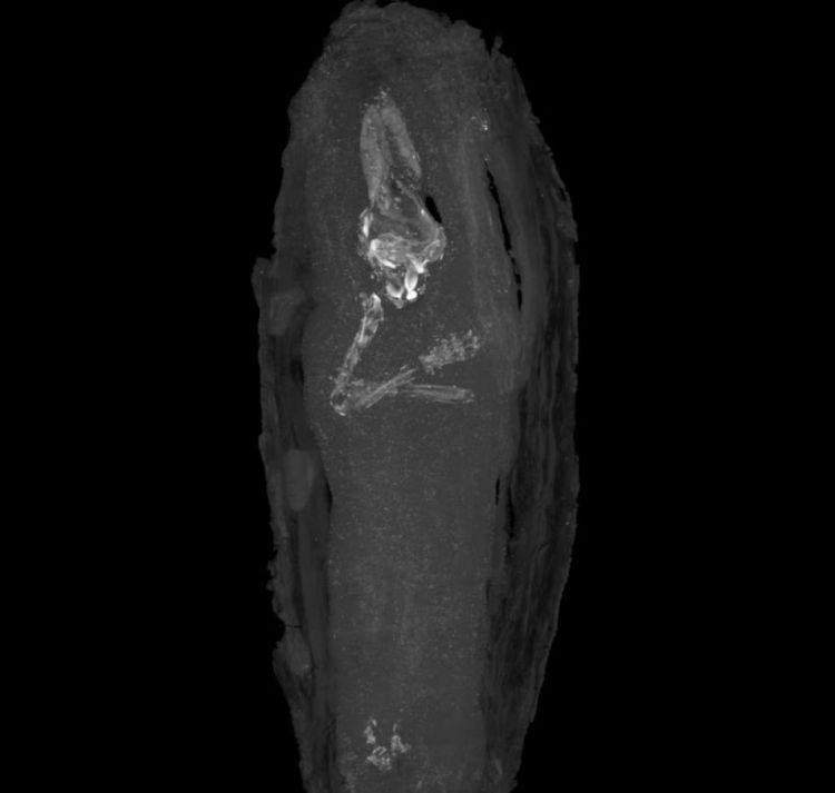 De armpjes zijn goed zichtbaar en liggen gekruist op de borst. Afbeelding: The Fitzwilliam Museum.