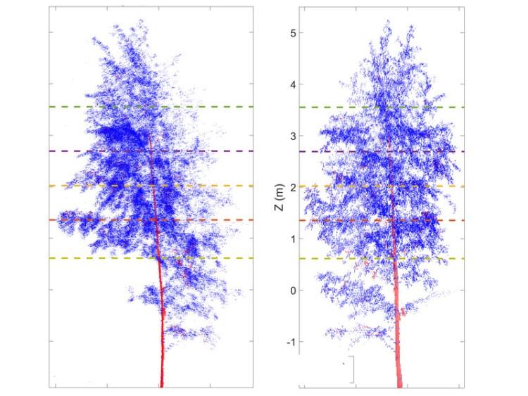De houding van bomen verandert in de nacht, zo blijkt uit dit onderzoek. Afbeelding: Technische Universität Wien.