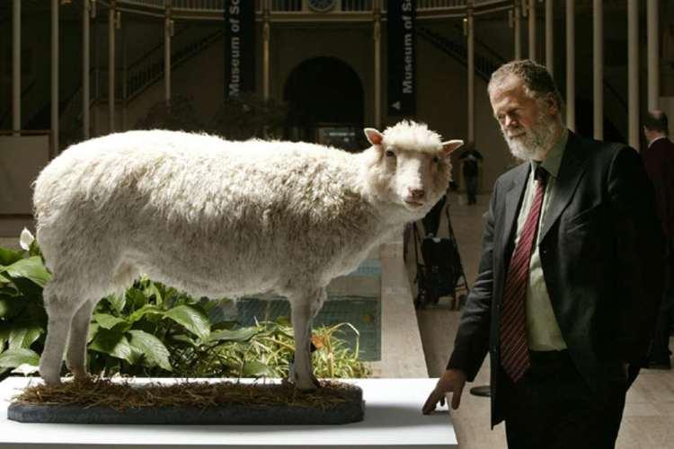 Dolly is na haar dood opgezet en te bewonderen in het nationale museum van Schotland.