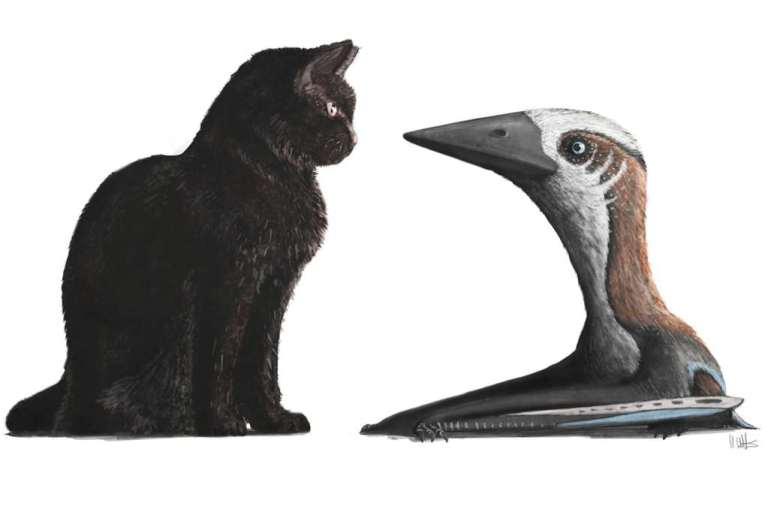 De pterosaurus was ongeveer net zo groot als een huiskat. Afbeelding: Mark Witton.