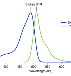 figure 2 a graph showing the stokes shift of gfp  [ 1600 x 1016 Pixel ]