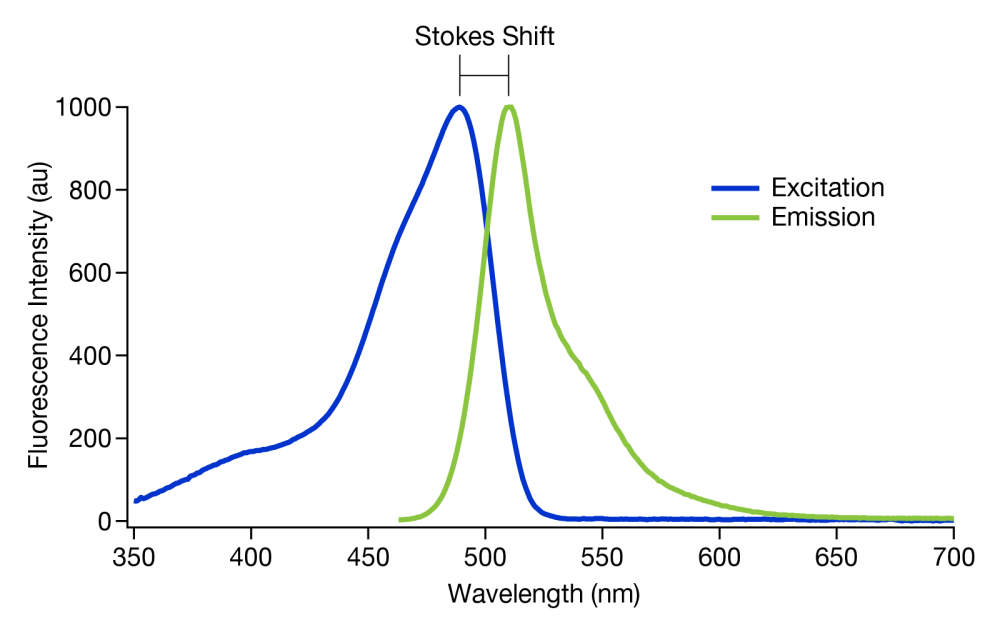 medium resolution of figure 2 a graph showing the stokes shift of gfp