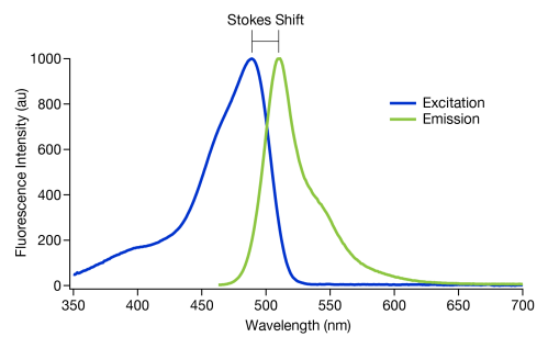 small resolution of figure 2 a graph showing the stokes shift of gfp