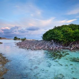 Blue Carbon - MIGHTY MANGROVE