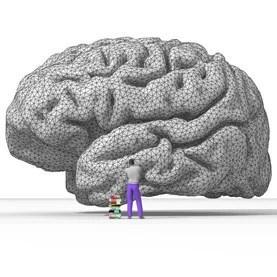 rendering of the human brain