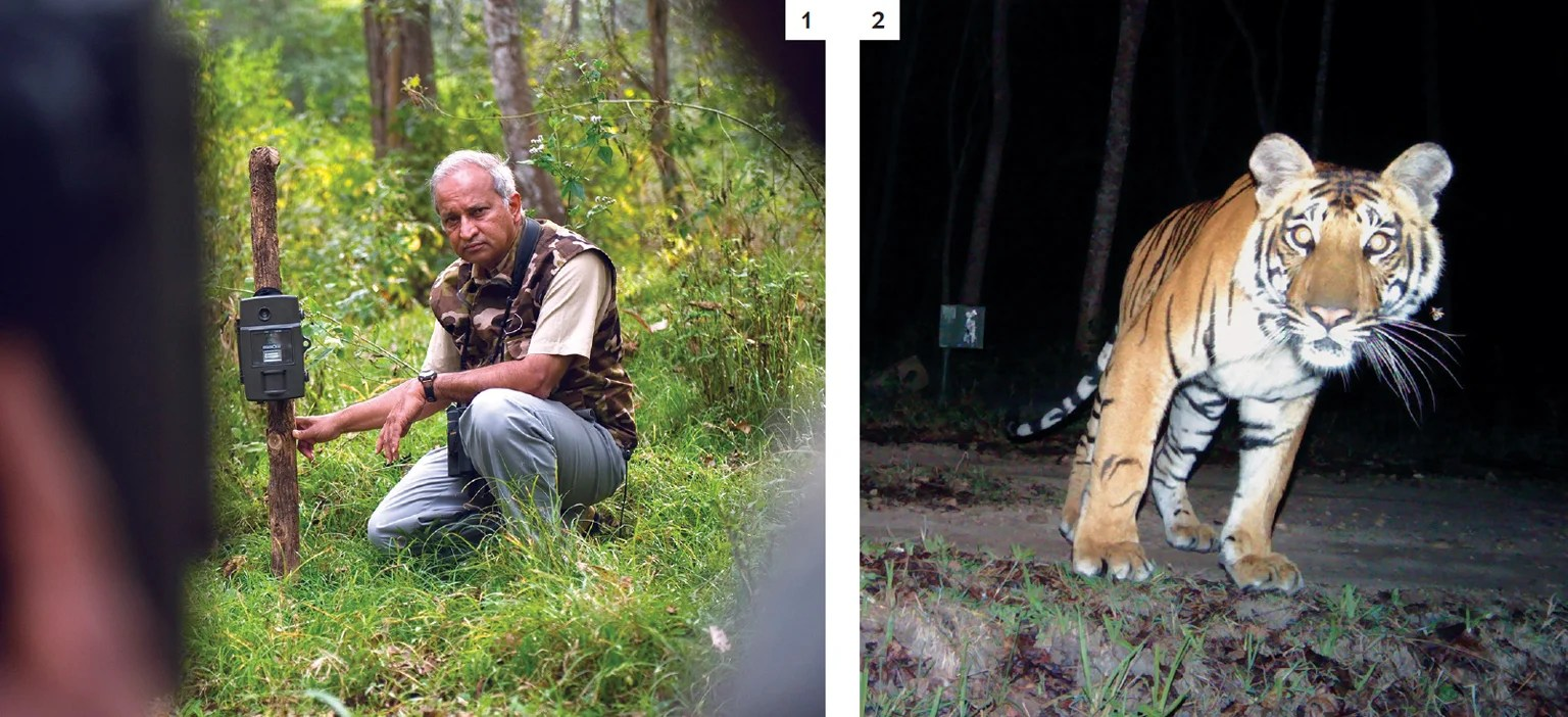hight resolution of spying on tigers the author sets up a camera trap in a forest in india to automatically photograph the creatures that pass by 1