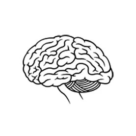 Can Training to Become Ambidextrous Improve Brain Function