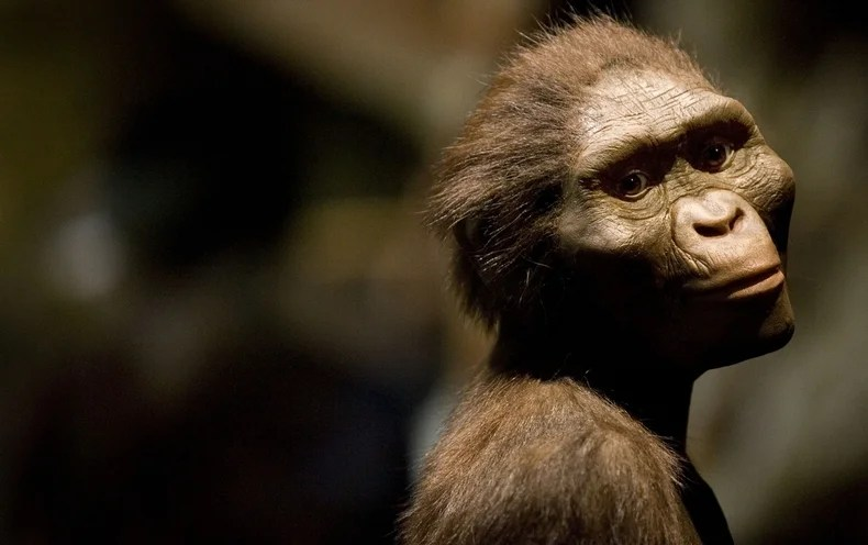 A sculptor's rendering of the hominid Australopithecus afarensis. Credit: DAVE EINSEL Getty Images