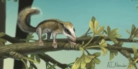 Mini Mammals Discovered in China