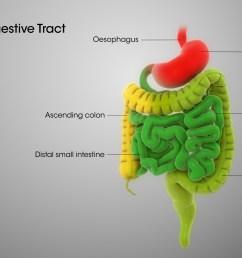digestive system ph levels [ 1920 x 1080 Pixel ]