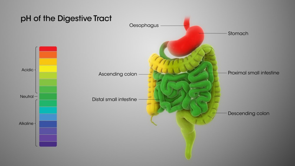 medium resolution of digestive system ph levels