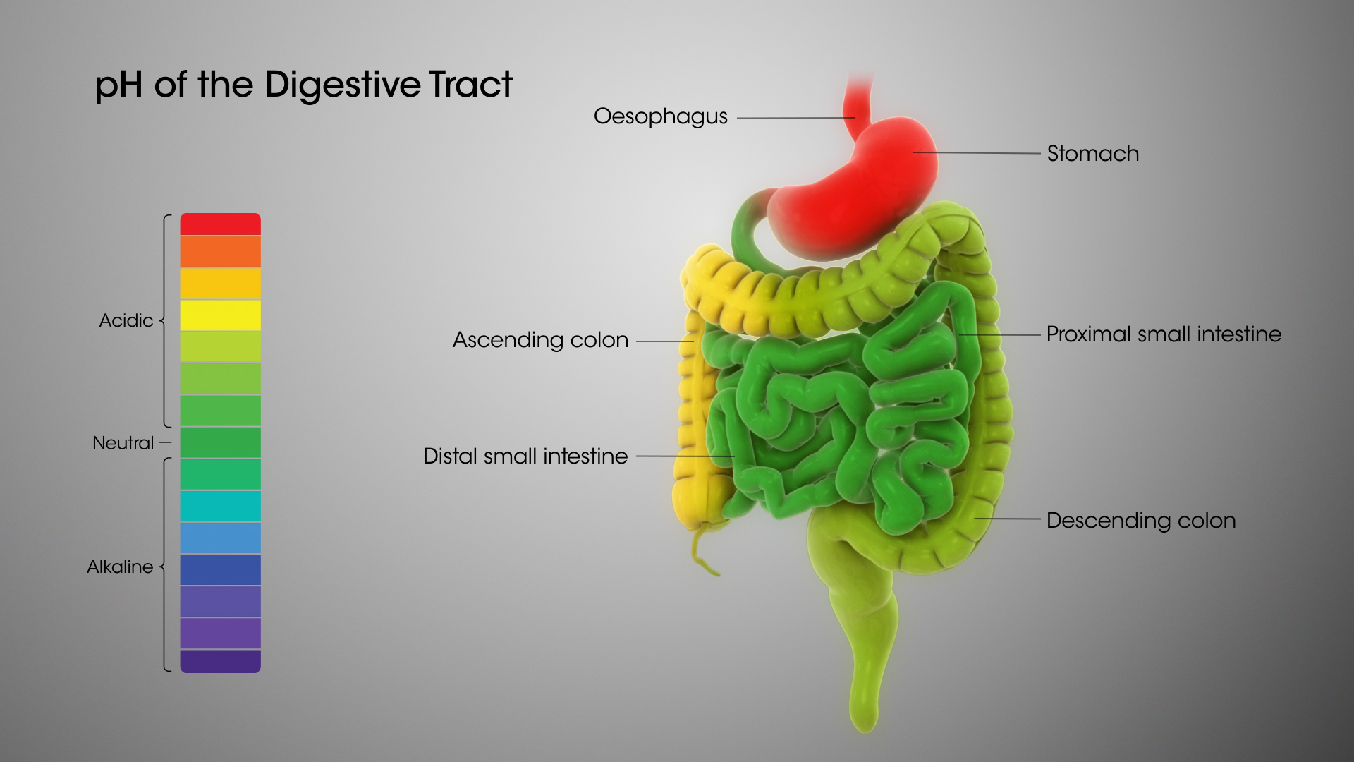 hight resolution of digestive system ph levels