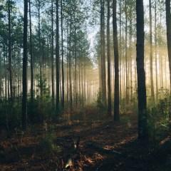 Quanti alberi ci sono sulla terra?