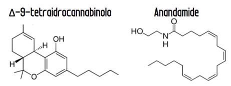 cannabinoindi THC e anandamide