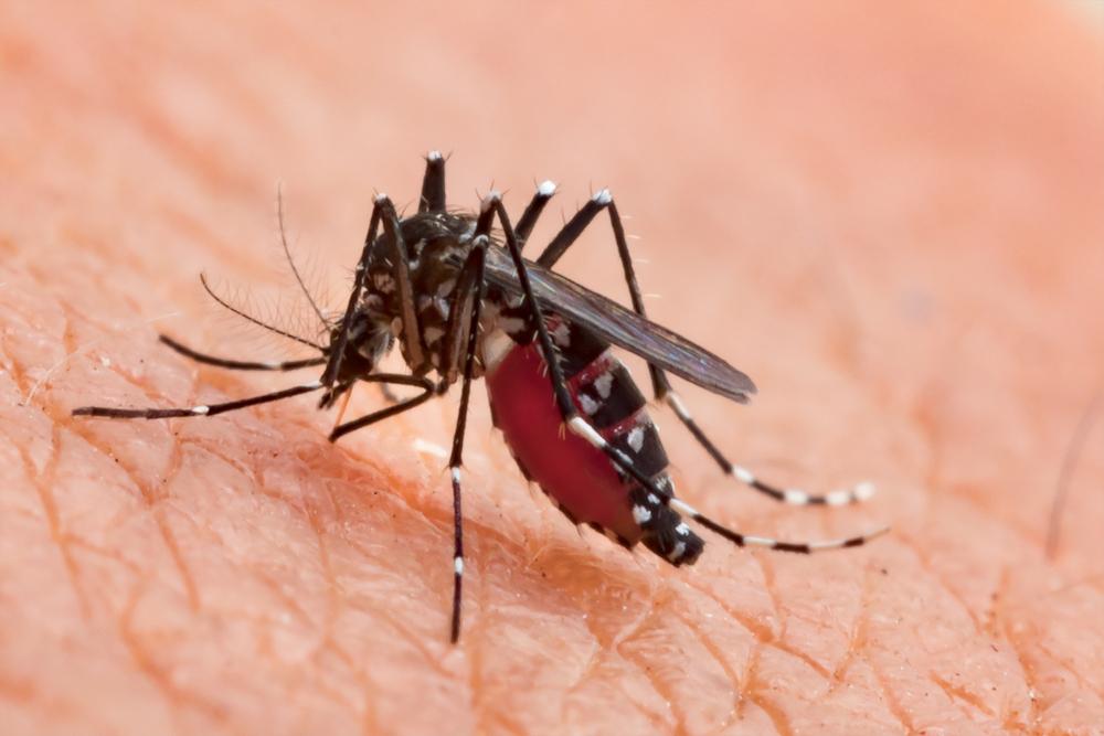 L'assassino è… la zanzara