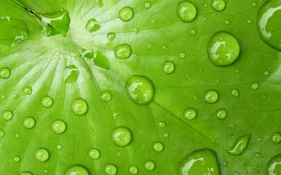 L'antiaderenza del futuro ispirata dalle foglie di loto