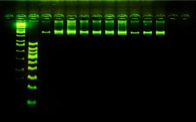 Amplificatori di DNA e radiazioni varie