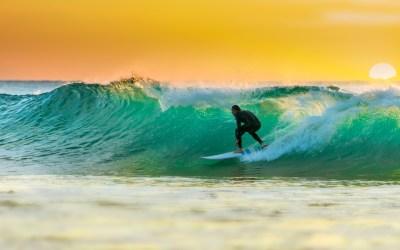 Organoidi sulla cresta dell'onda
