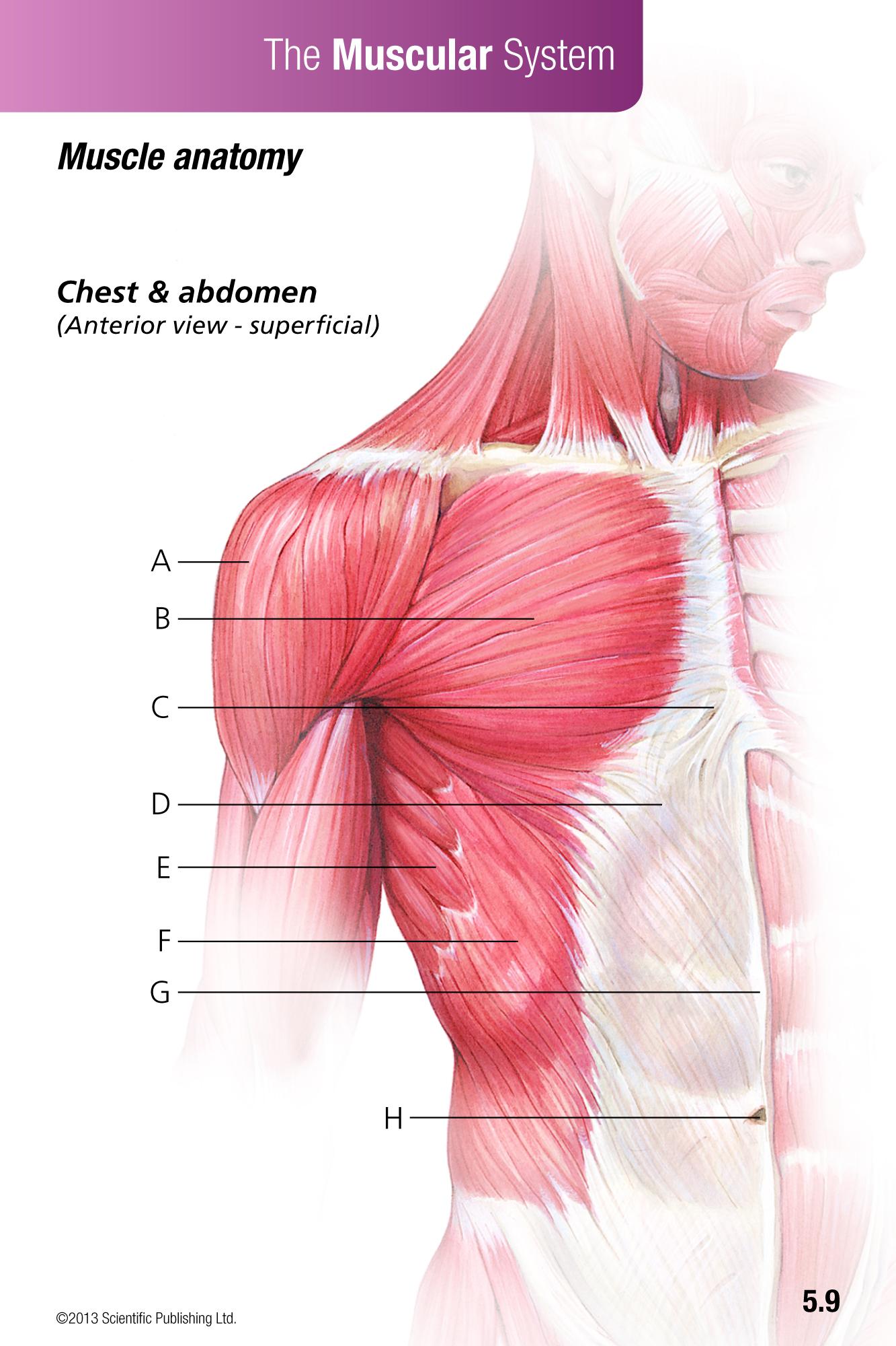 Printable Anatomy Flash Cards Tutore