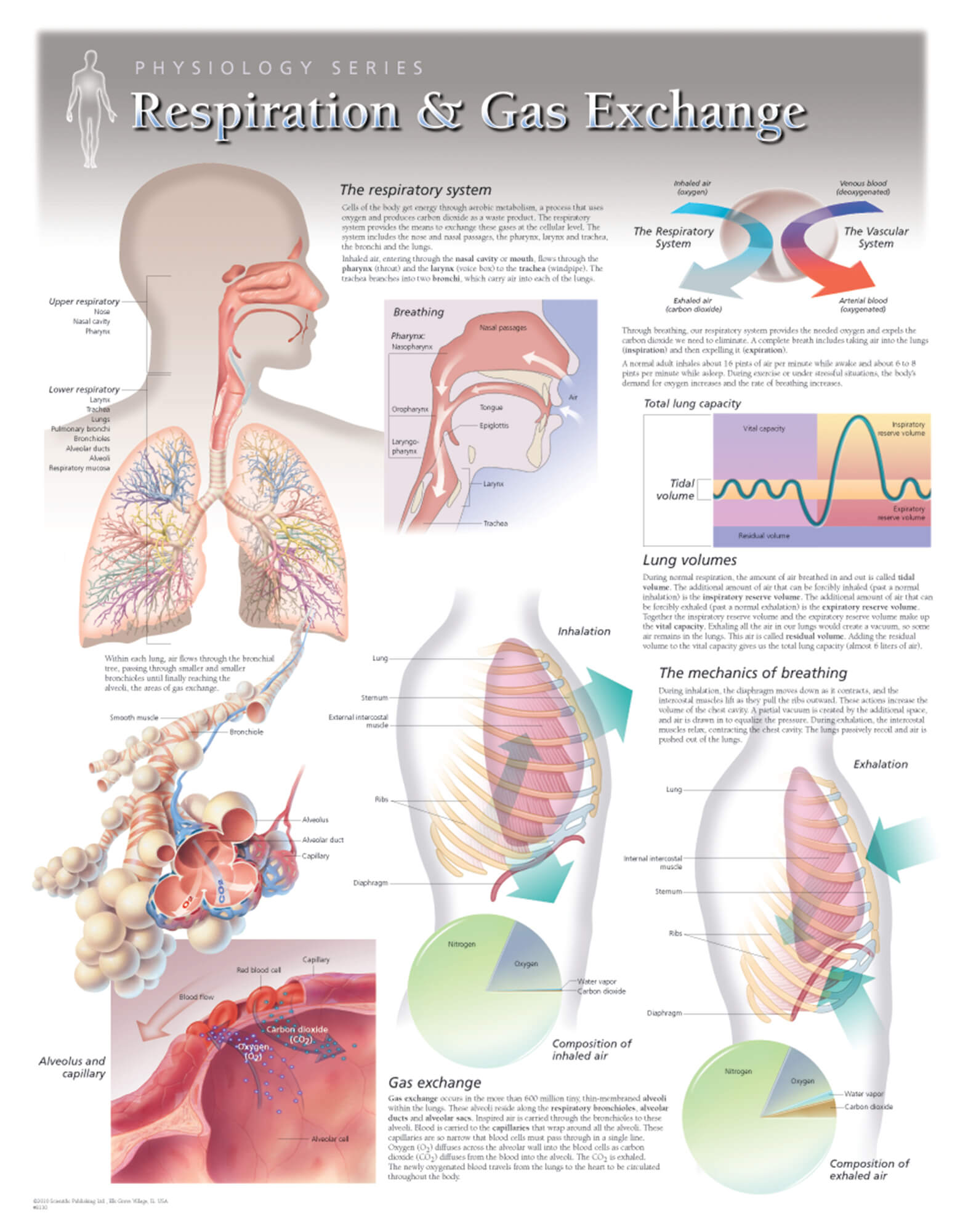 hight resolution of respiration and gas exchange respiratory physiology