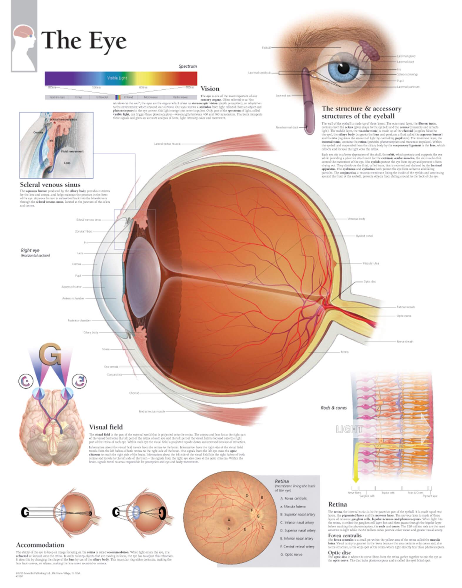 The Eye Scientific Publishing