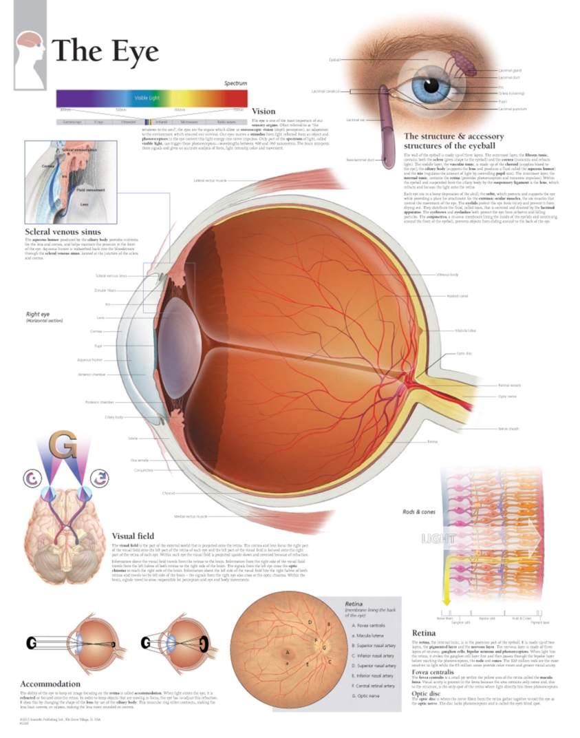 The Eye - Scientific Publishing
