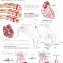 Anatomical Heart Diagram 7 Pin Trailer Plug Wiring Flat Understanding Acs – Scientific Publishing