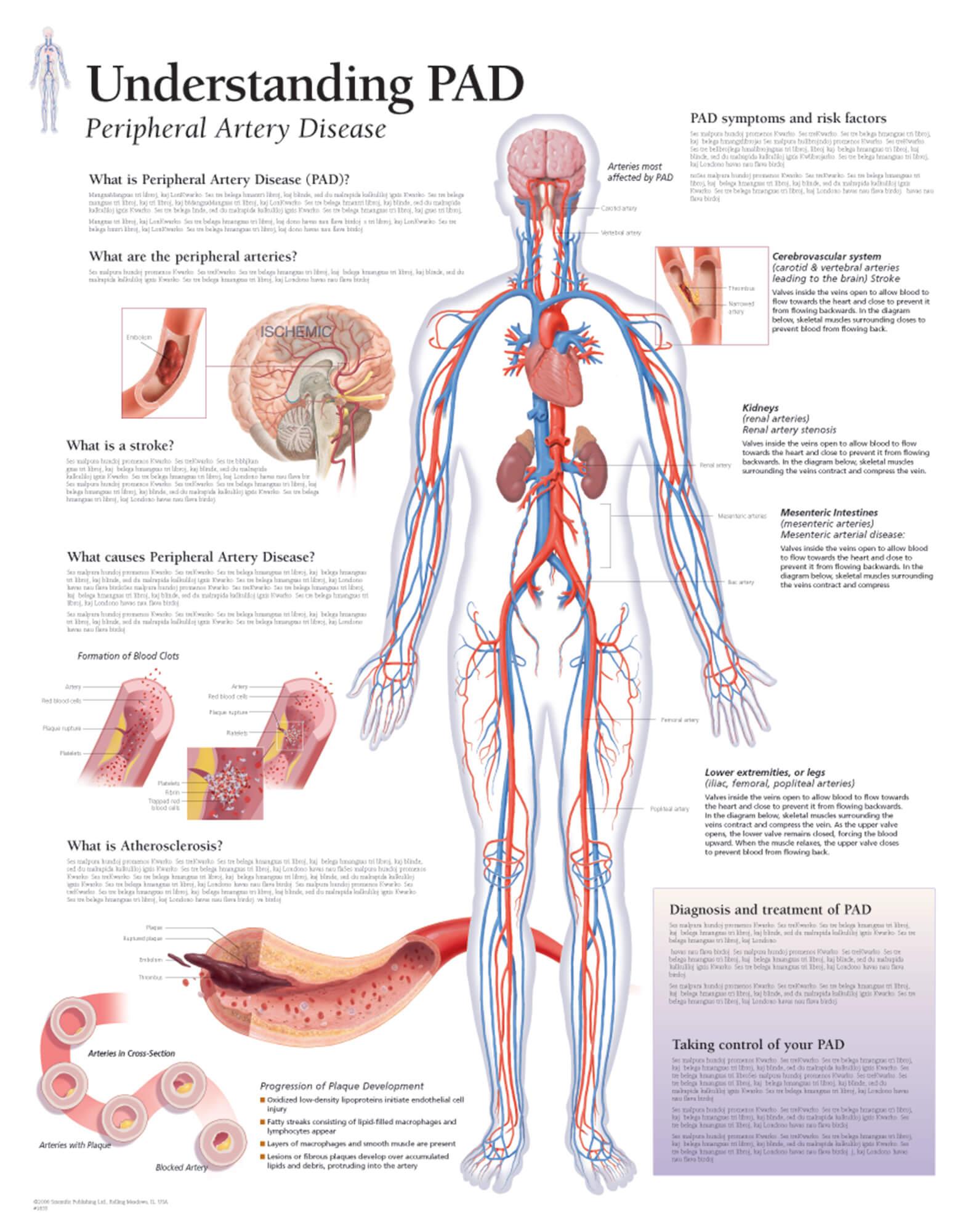 vagus nerve diagram vl 1500 wiring understanding pad – scientific publishing