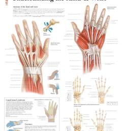 understanding the hand u0026 wrist u2013 scientific publishinghand and wrist anatomy [ 1572 x 2000 Pixel ]