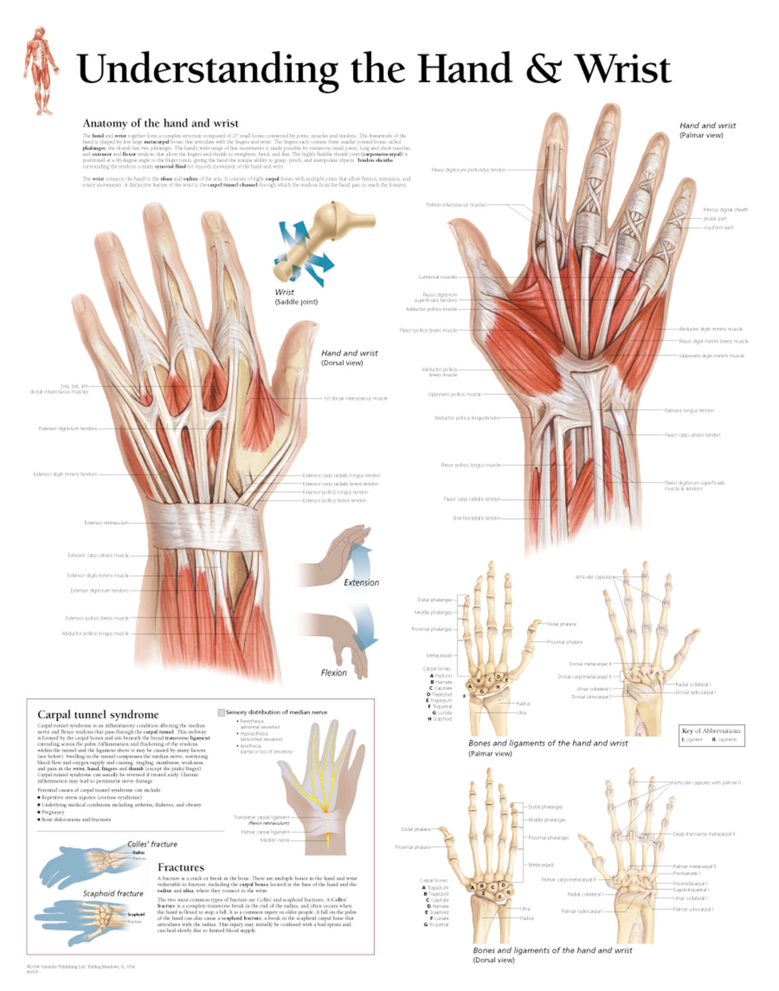 hight resolution of understanding the hand u0026 wrist u2013 scientific publishinghand and wrist anatomy