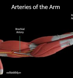 the subclavian artery continues to travel laterally toward the shoulder then turns inferiorly at the axillary region area of the arm pit to become the  [ 1267 x 719 Pixel ]