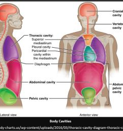 diagram of the body cavities wiring diagram forward blank diagram of body cavities body cavities and [ 1152 x 745 Pixel ]