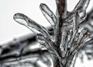 tree-freeze-ice-winter