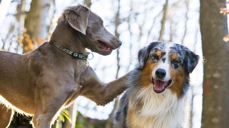 vivre-deux-chiens