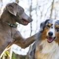 vivre avec 2 chiens