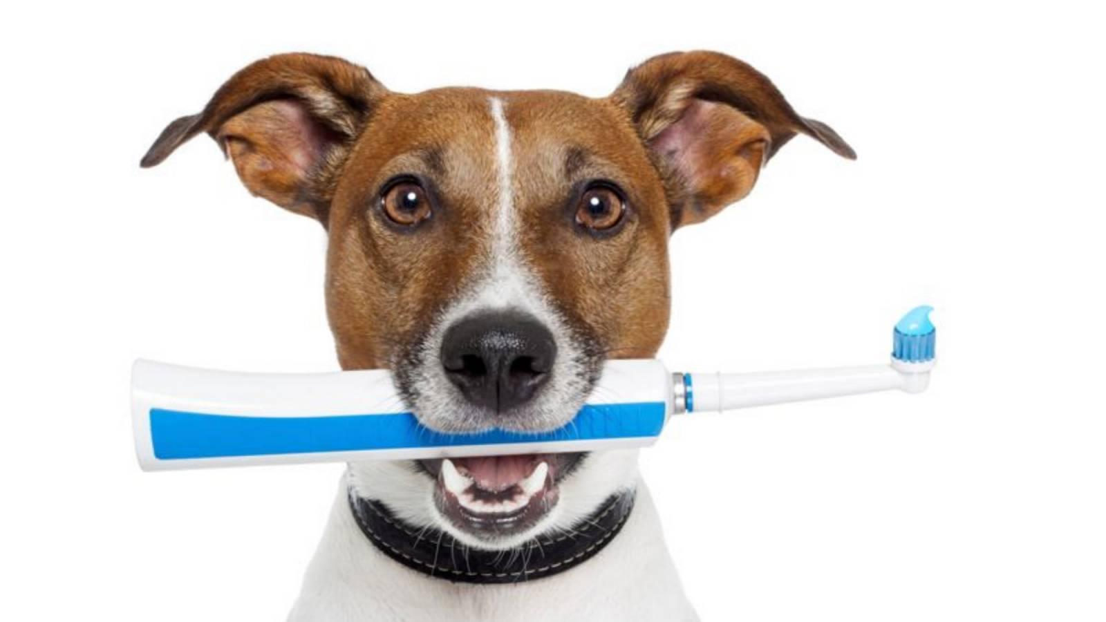hygiene chien