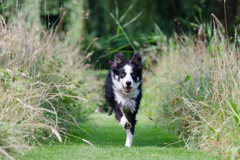 Sifflet ultrason chien
