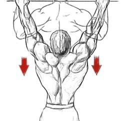 Pull Up Muscles Worked Diagram Harley Wiring Diagrams Scoliosis Workouts Ups 3 X Failure